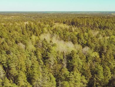 Mežsaimniecība